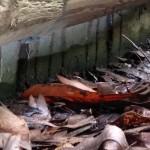 Termite-mud-tubes-on-concrete-slab-edge